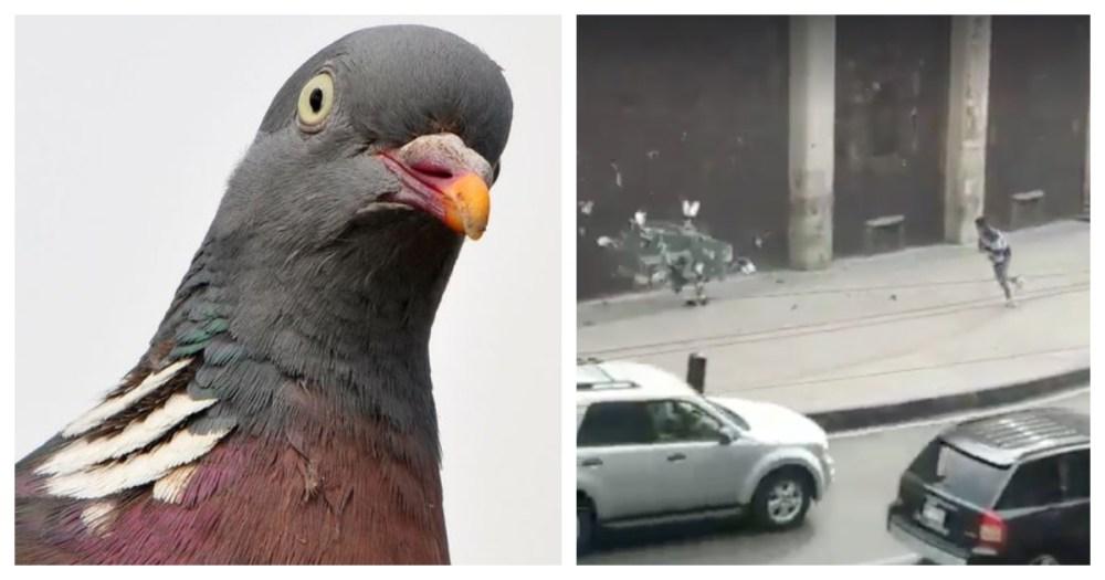 Cazadores de palomas (literal) se viralizan; se arma la campal en Internet