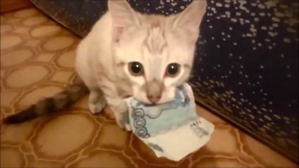 Estas fotos demuestran que los gatos no respetan nada