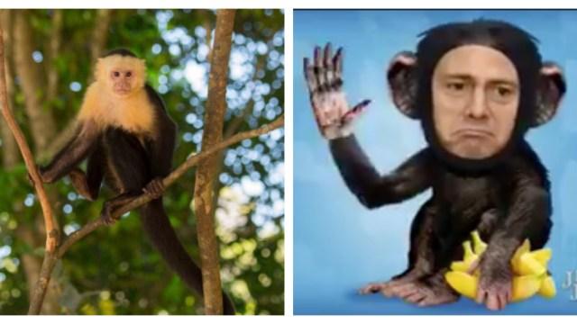 Los mejores memes del mono en reforma