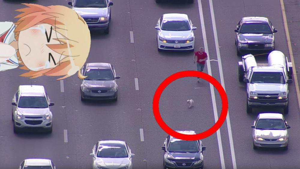 Paraliza-Tráfico-Perro-Freeway-Phoenix