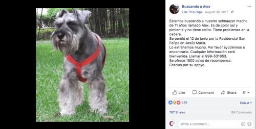 Ofrecen un viaje a Rusia por encontrar a su perro perdido