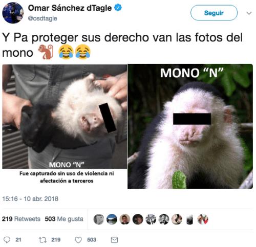 El-mono-capuchino-prófugo-es-capturado-1