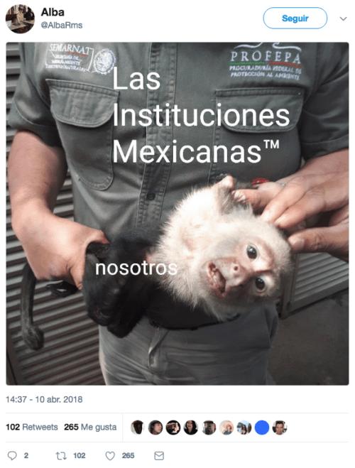 El-mono-capuchino-prófugo-es-capturado-11