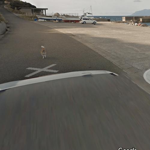 Perro persigue camión de Google Street View