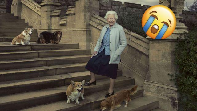 Corgi de la reina Isabel II murió