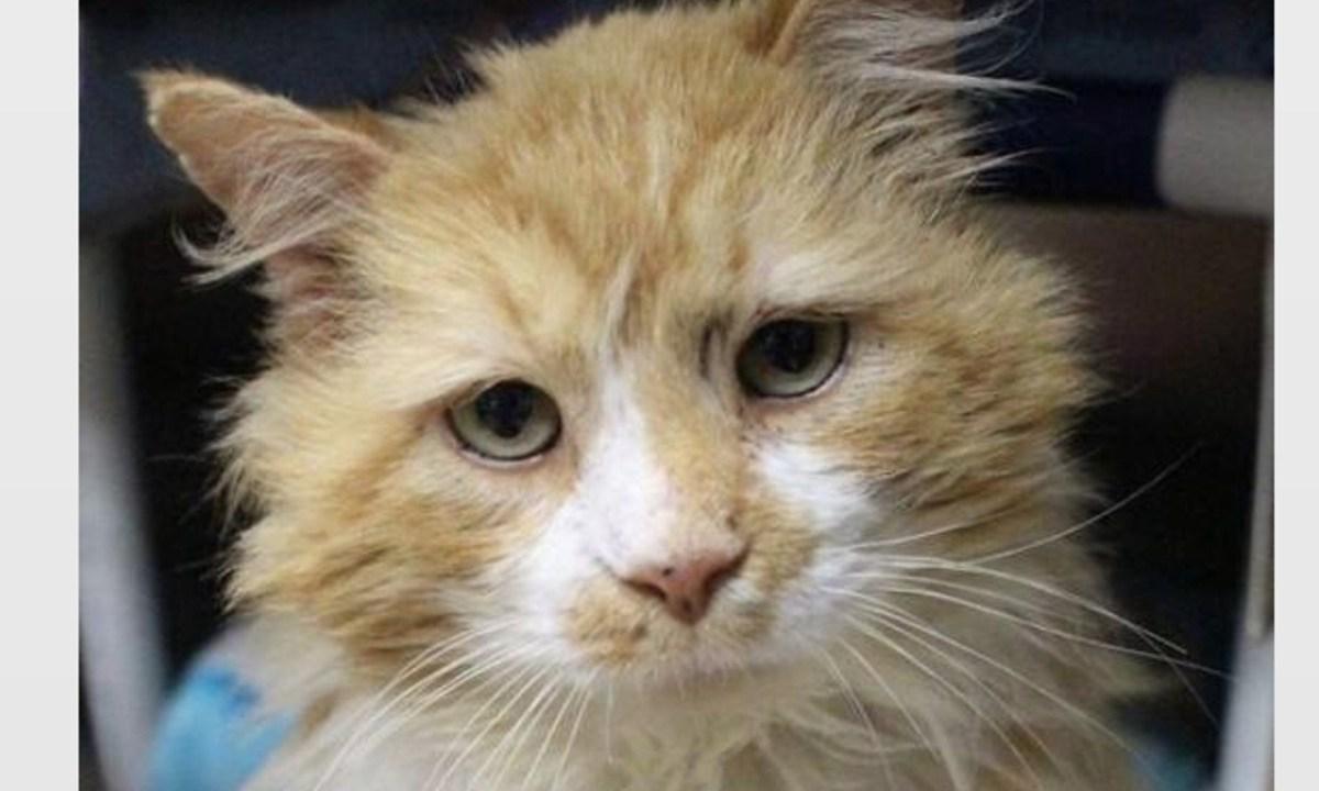 Gato Abandonado Familia 19 kilómetros Toby Abandono Gatos