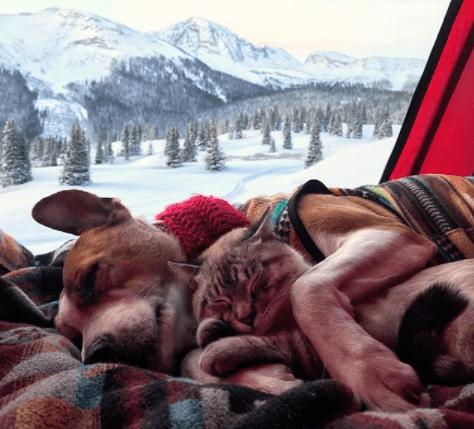 amistad-perro-gato-callejeros-corazon-instagram-henry-baloo