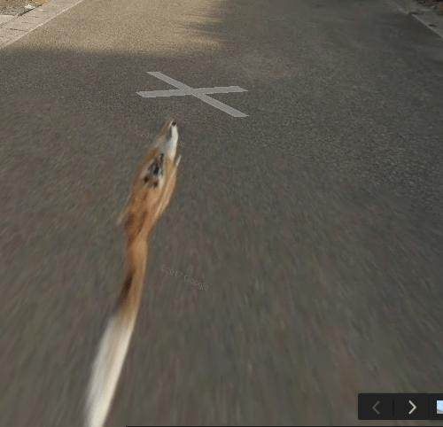 Perrito persigue al camión de Google Street View