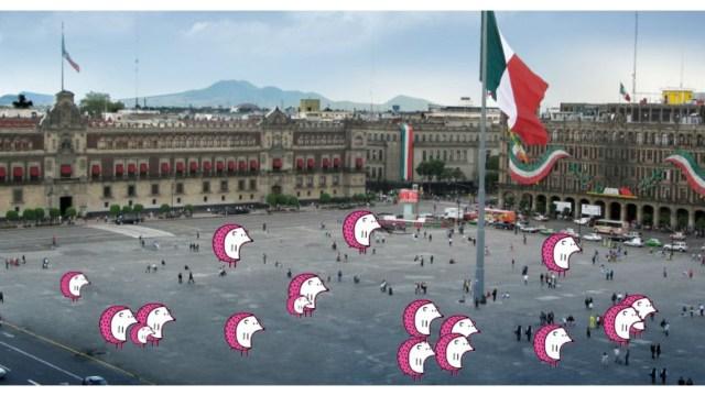 erizos.mx-erizo-erizos-ciudad-mexico-centro-historico-cdmx