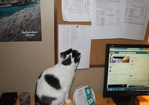 gatitos-haciendo-travesuras-1A