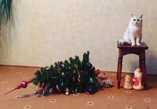 gatitos-haciendo-travesuras-2C