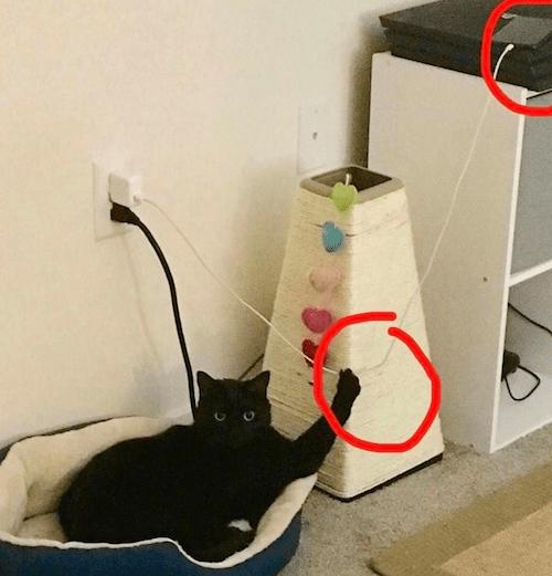 gatitos-haciendo-travesuras-6