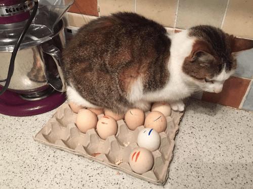 gatitos-haciendo-travesuras-7