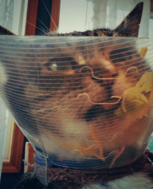 gatitos-haciendo-travesuras-9