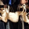 gatitos-haciendo-travesuras-P