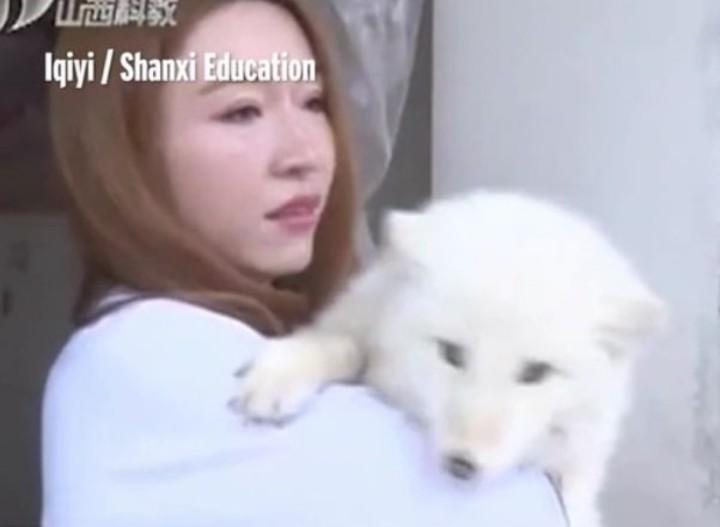cachorro-de-zorro-que-wang-su-duena-confundio-con-un-perro-spitz