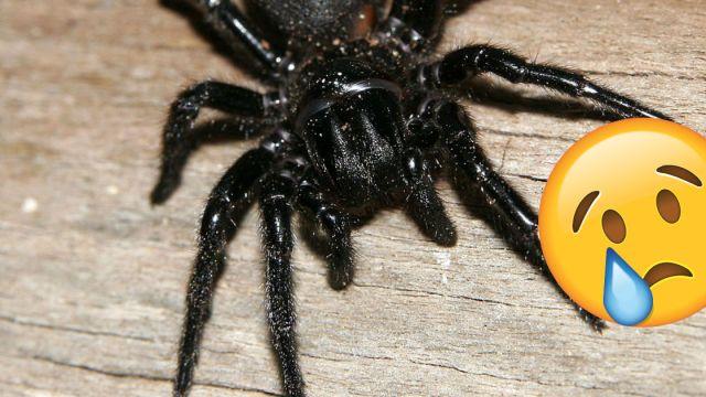 Murio la arañ más vieja del mundo