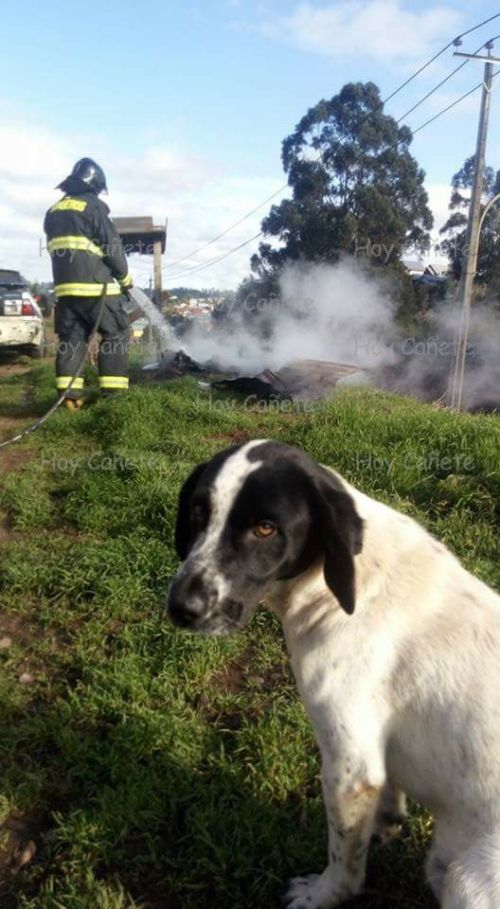 queman-casa-de-perrito