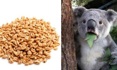 Alertan por cereal