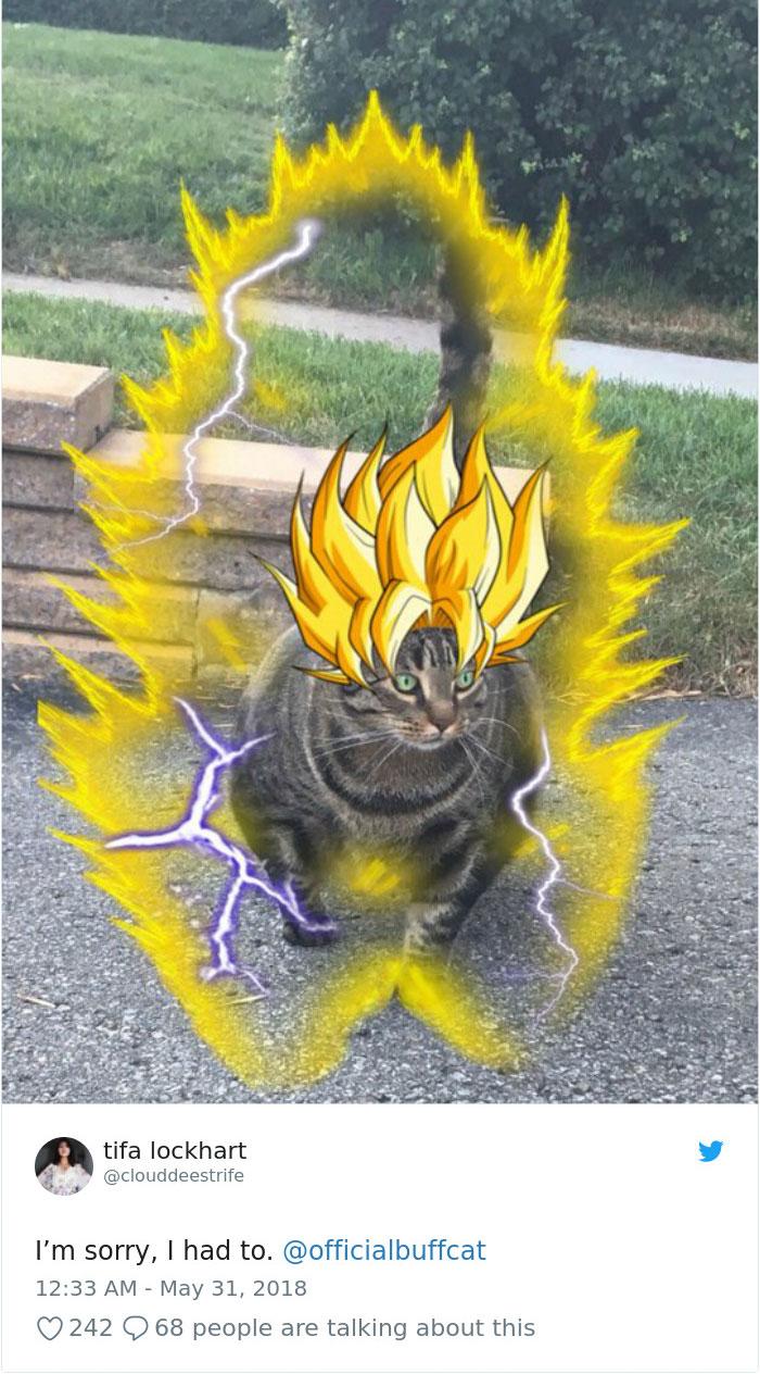 fotos-video-gato-musculoso-mundo-internet-twitter