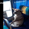 Perrito Chofer Conductor Camión Animal Viajero Video