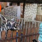 Mundo-Trump-Cebra-Burro-Zoológico-Egipto