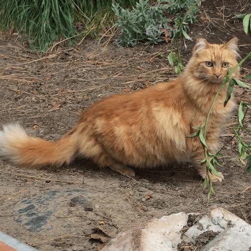 Gatos que viven en disneylandia