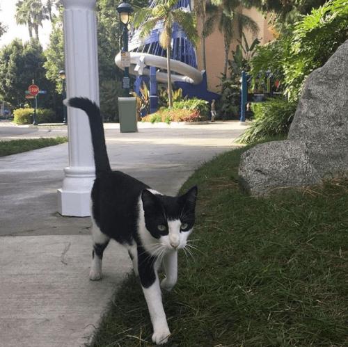 los gatos que viven en disneylandi