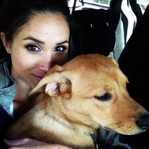 Meghan markle adopta perro