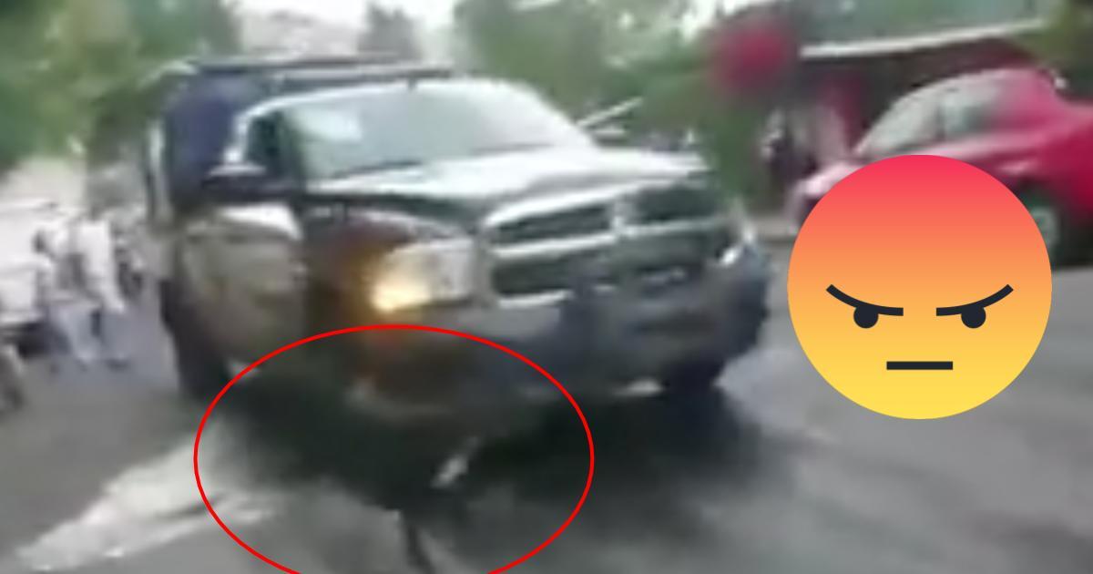 Investigan a policías que atropellaron a un perro