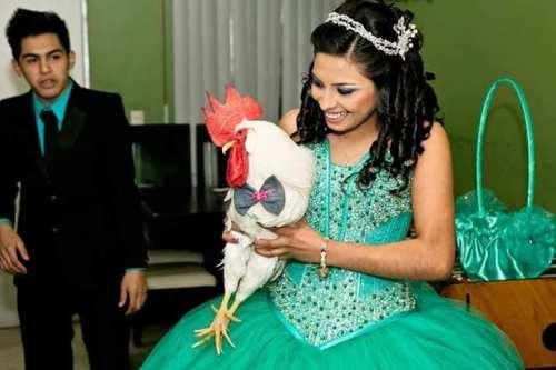 Pollito de colores sobrevive y ahora es un gallo blanco