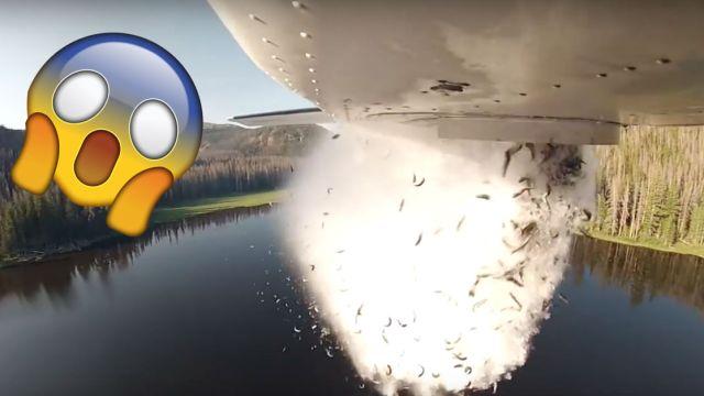 video-aviones-tiran-peces-salvar-rios-utah