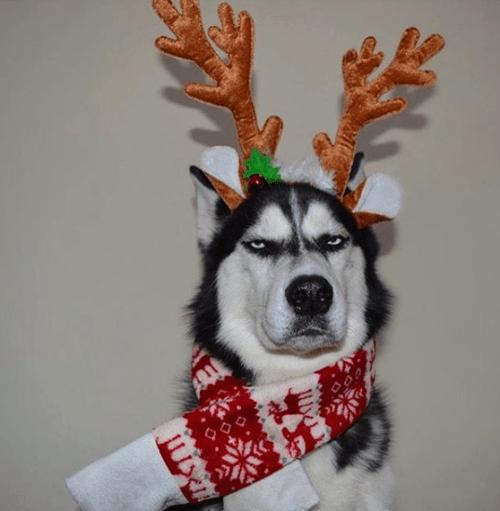 Perro odia las fotos