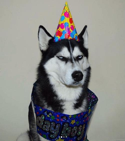 Perro odia la vida