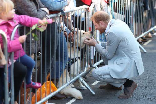 Principe Harry se detiene a acariciar a perrito