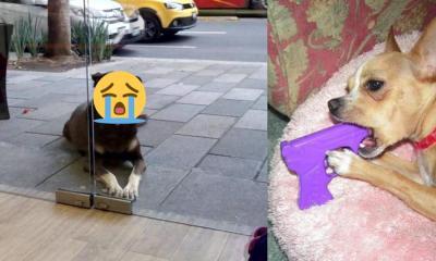 Historia del perro que pedía pizza afuera de un restaurante