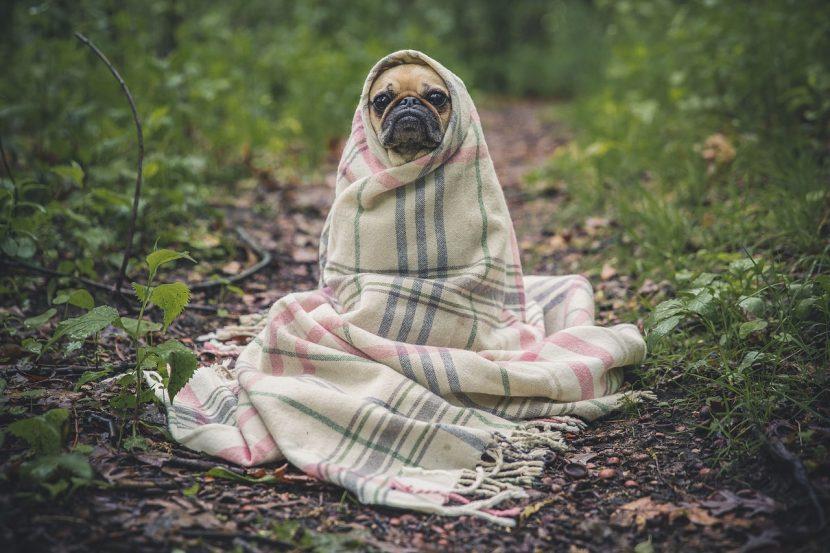 Cómo cuidar a tu mascota con este maldito frío