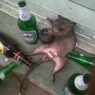 """Desaparece alcohol comisaría de policía: """"fueron las ratas"""""""