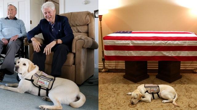 Perro George H. W. Bush Lo Vela, Funeral George H. W. Bush, Perro, Sully, Perro George H. W. Bush, Funeral
