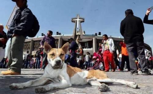 Perros abandonados en la básilica de guadalupe