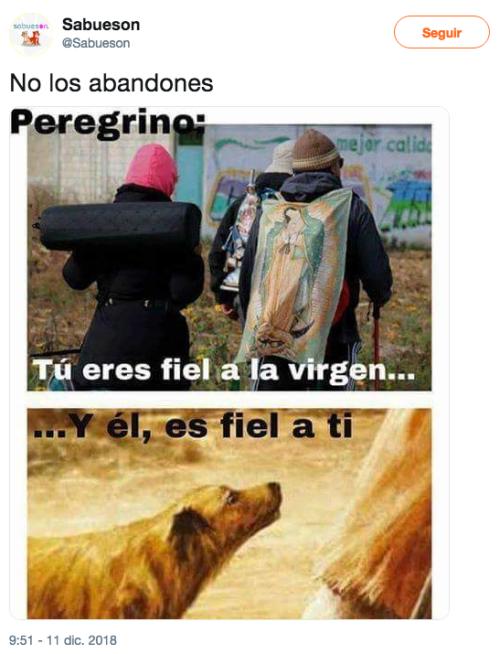 Perros son abandonados en la basilica de Guadalupe