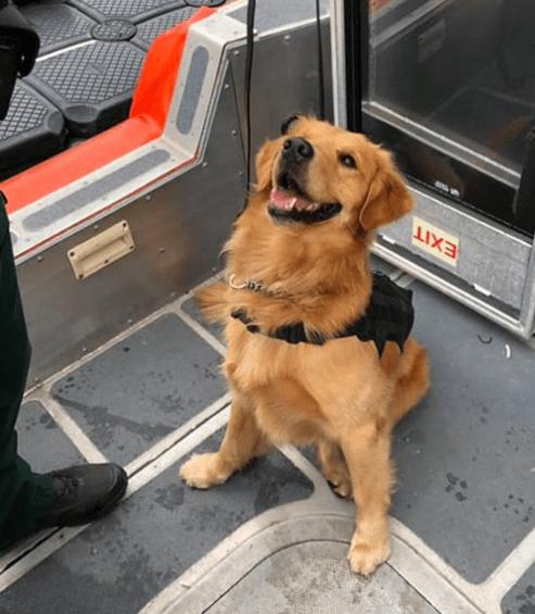 Perro con sobredosis después de inhalar drogas de concierto
