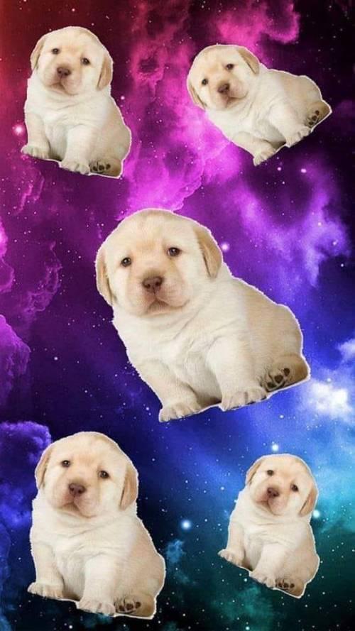 Memes del perrito triste