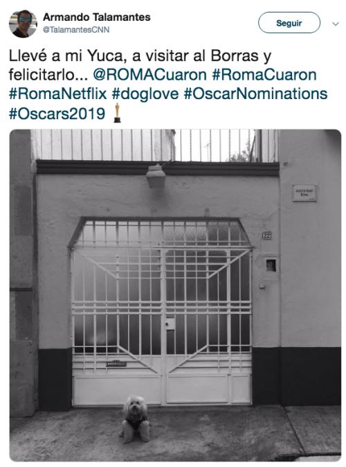 Piden nominación para Borras el perrito de Roma