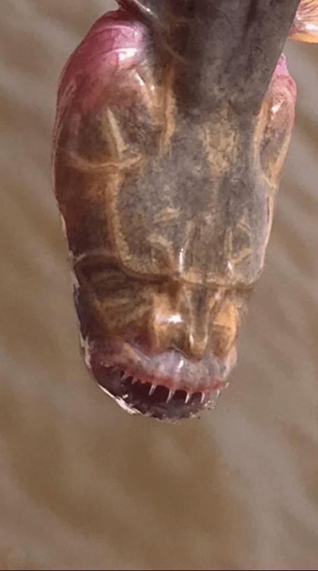 Encuentran extraña criatura marina parecida a un alien