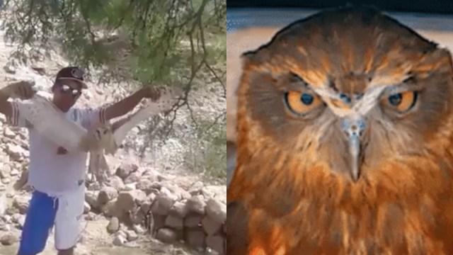 Queman Lechuza Viva En Durango, Durango, Queman Lechuza Viva, Lechuza, Video, San Juan Del Río