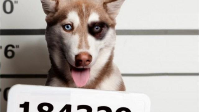 Este perrito fue detenido y llevado al ministerio