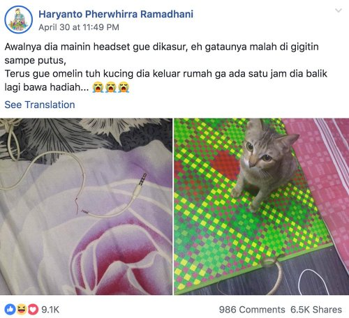Gato destruye audífonos y los repone con una serpiente