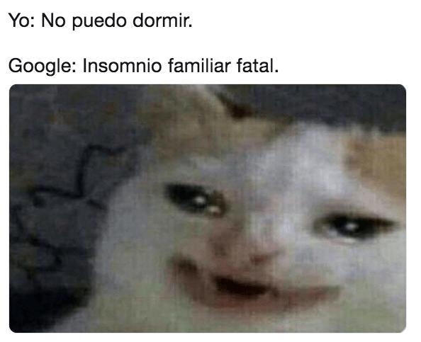 Memes del gato llorando Google