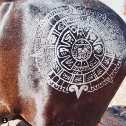 Acusan a Pepe Aguilar de maltratar a sus caballos